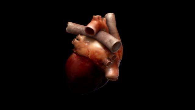 Human Heart beating video