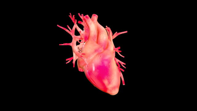 human heart rotation with high details video