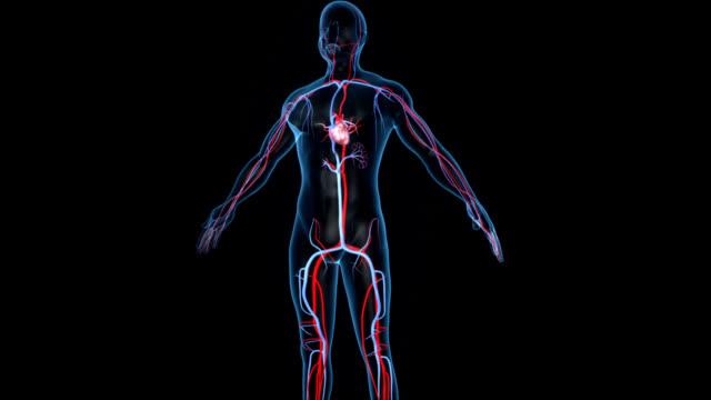 Human Heart video