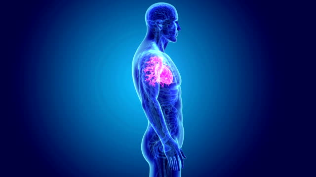 Human Heart with Anatomy video
