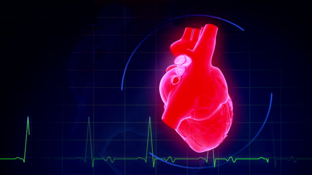 Human Heart With Pulse Waveform video