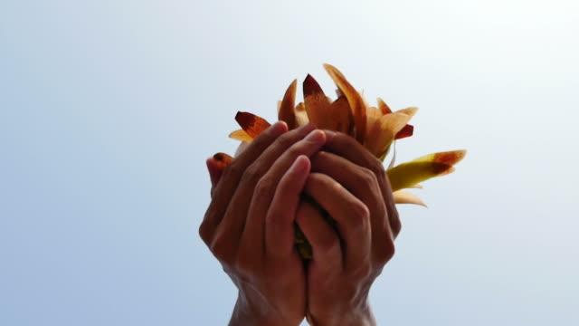 Human help plant propagation. video