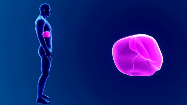 Human Liver with Body video