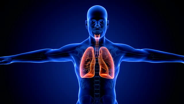 Human Lung Respiratory System scan video