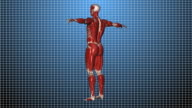 Human Muscle with Luma Mask LOOP video