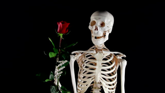 Human skeleton holding a rose video