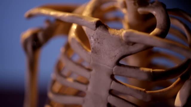 Human skeleton video