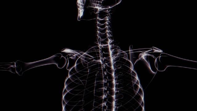Human Skeleton X-ray Animation video