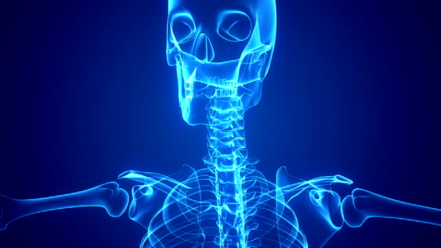 Human Skeleton X-ray Animation video