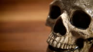 Human Skull CU tracking shot, shallow DOF video