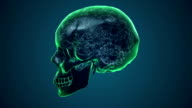 Human Skull Transparent with Brain. X-ray 3D render Loop Rotation Full HD video