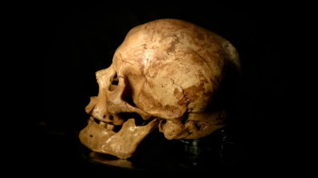 Human skull video