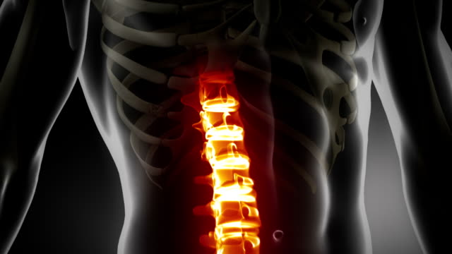 Human spine detailed medical x-ray scan video