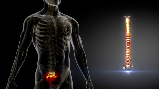 Human spine x-ray medical scan video