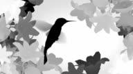 Humming bird, version gray. video