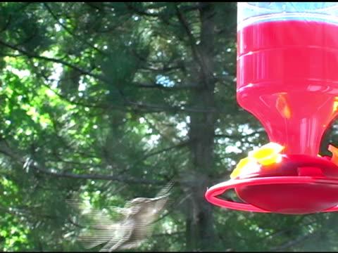 Hummingbird 1 video