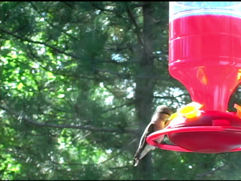 Hummingbird 2 video