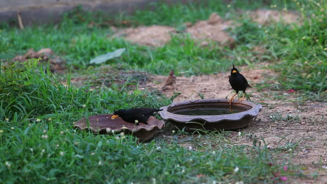 Hungry birds Searching feed. video