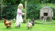 Hungry Chickens... video