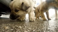 Hungry, homeless dogs video