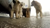 Hungry, homeless puppies video