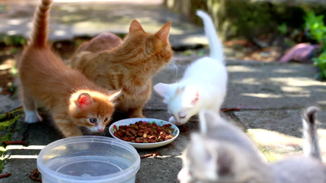 Hungry Kittens video