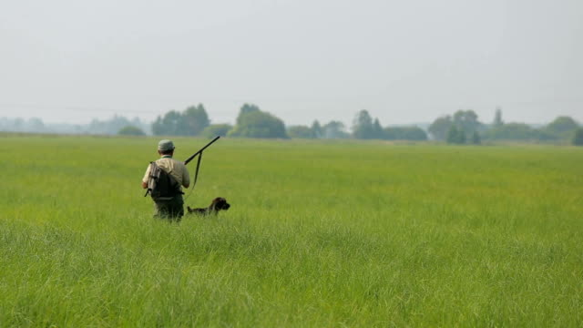 A hunter with a gun to hunt among the tall grass, shoots and gets into a bird. video