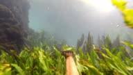 Hunting scenes underwater video