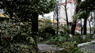 Hurricane in the city. video