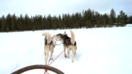 Husky dogs pulling a sleigh into forest video