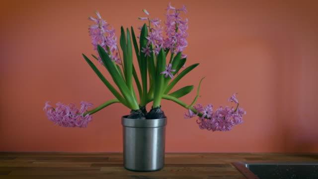 Hyacinth Zoom video