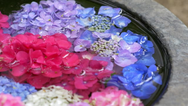 Hydrangea flower petals floating in the water. Japanese style flower arrangement in stone base. video