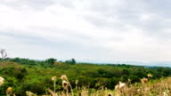 Hyper lapse shot of Green forest on foot of mountain and moving sky background video