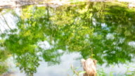 Hyper Lapse shot of green tree reflection in the hot spring In nature video