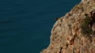 Iberian ibex on the cliff video
