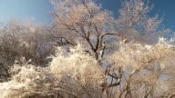 Ice on trees video
