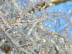 Ice Storm 6 video