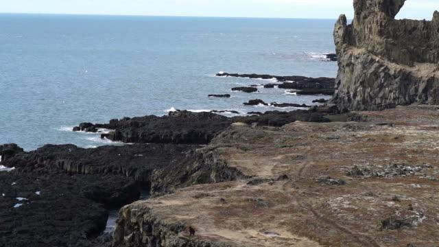 Icelandic sea gulls live on cliff around Londrangar peninsular in west coast of Iceland. Shot in slow motion 120 fps video