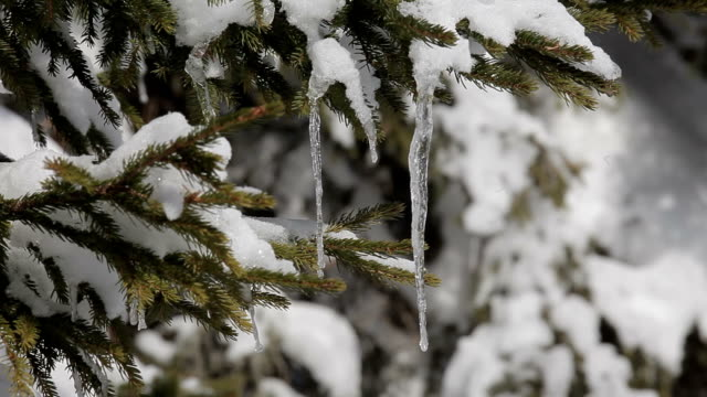 Icicles on the tree video