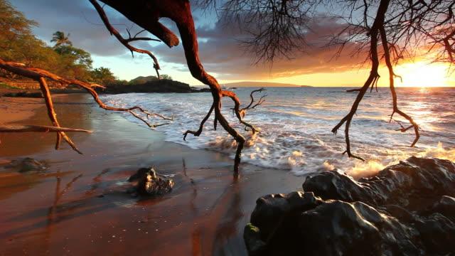 idyllci maui sunset - pacific ocean hawaii video