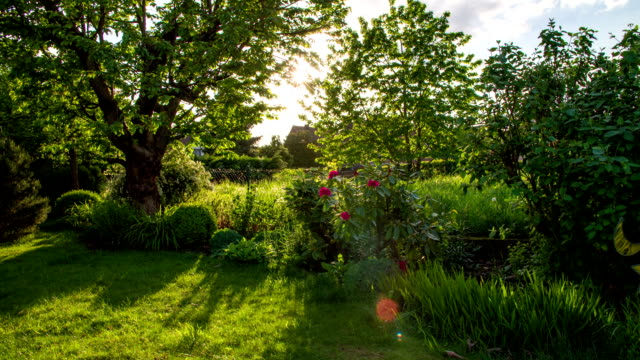 CRANE UP: Idyllic Garden video