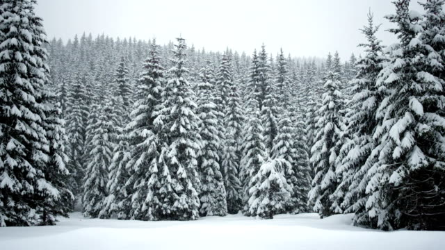 Idyllic Winter Scene video