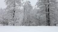 HD: Idyllic winter time with snow falling video