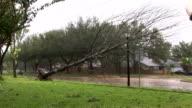 Ike Tree Down Cars video