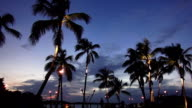 Illuminated palm trees in the evening video