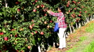 Immigrant Agricultural Labour Okanagan Valley video