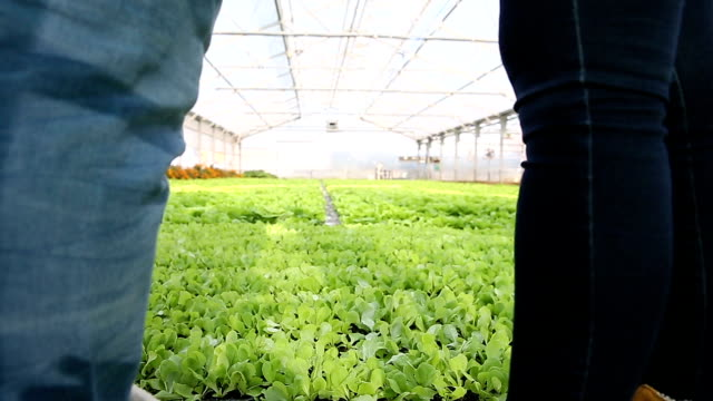 In a greenhouse video