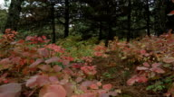In autumn forest video
