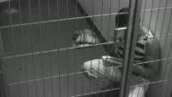 In jail video