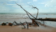 in rainy season big waves from the ocean destroy and kill pine trees. video